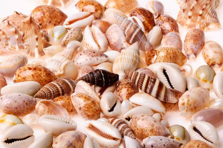 Sea shell textures on white background photo