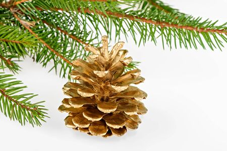 Golden pine cone with conifer on white background photo