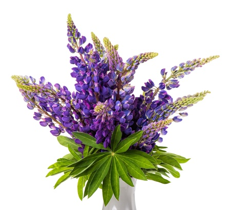Beautiful lupin bouquet in vase isolated on white background photo