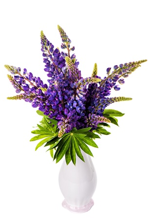 Beautiful lupine bouquet in vase isolated on white background photo
