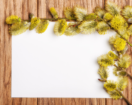 sallow: willow catkin branch on the old wooden table and paper blank
