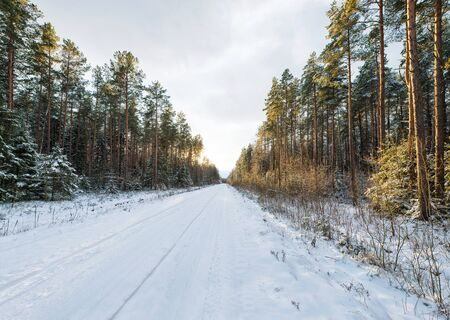 Empty snow covered road in winter forest, landscape with sun light Stock Photo