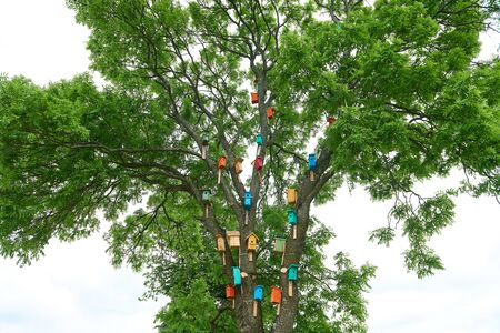 Colorful birdhouses on a big tree. nature protection concept