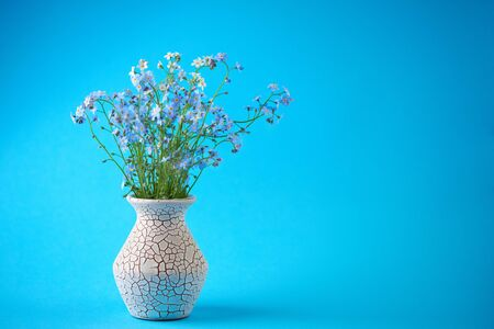 Little blue flowers in vase on colored background. Thin stem, small delicate flowers