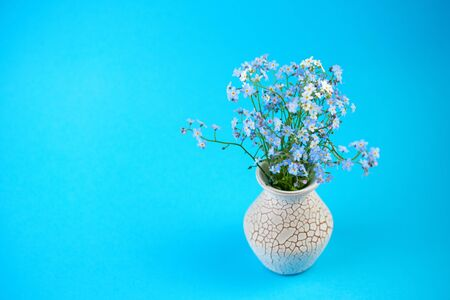 Little blue flowers in vase on colored background. Thin stem, small delicate flowers. Small DOF