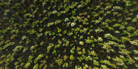 Colorful aerial view camera moves from green forest of dense mixed tree tops, birds-eye view (High-resolution 3D CG rendering illustration) Фото со стока