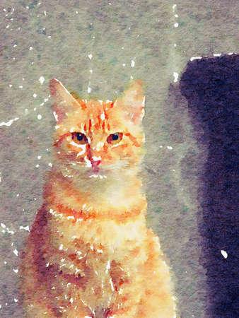Colorful watercolor hand-painted art illustration : cat / kitten / kitty (High-resolution 2D CG illustration) Stock Illustration - 122573963
