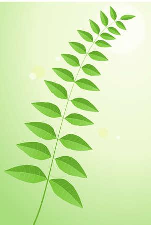 plant leaves Illustration