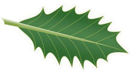 shining holly leaf