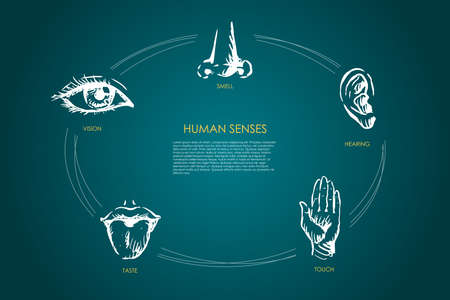 Human senses - vision, taste, touch, hearing, smell vector concept set. Hand drawn sketch isolated illustration