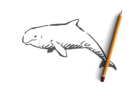 Beluga, sea, water, wildlife, hausen concept. Hand drawn beluga swimming in the ocean concept sketch. Isolated vector illustration.