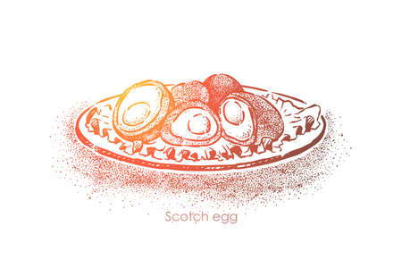 Scottish traditional food, british cuisine dish, boiled egg smeared in minced meat and fried in breadcrumbs. English restaurant menu, gourmet meal concept sketch. Hand drawn vector illustration