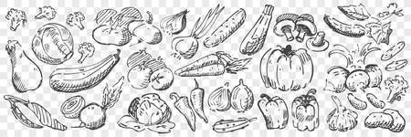 Hand drawn vegetables doodle set Stock Illustratie
