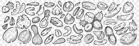 Hand drawn nuts doodle set Ilustração