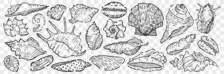 Hand drawn seashells doodle set. 向量圖像
