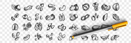 Nuts doodle set. Collection of hand drawn sketche templates patterns of almond cashews macadamia peanuts cedar pistachios hazelnuts walnuts seeds on transparent background. Natural food illustration. Imagens - 157186260