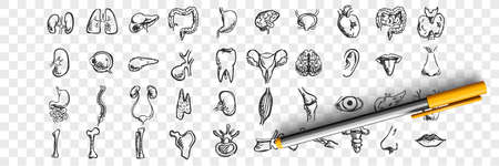 Human organs doodle set. Collection of hand drawn sketches templates patterns of male female liver heart lungs kidney lips tongue nose eyes on transparent background. Anatomical body part illustration