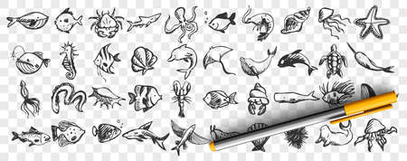 Marine life doodle set. Collection of hand drawn templates sketches patterns of different sea and ocean fish sharks turtles octopus oyster. Animals in wildlife enviroment nature illustration. Illustration