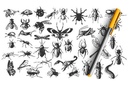 Insects doodle set. Collection of hand drawn sketches templates patterns of animals bugs butterflies cockroach spiders bees on white background. Natural wildlife illustration Illustration