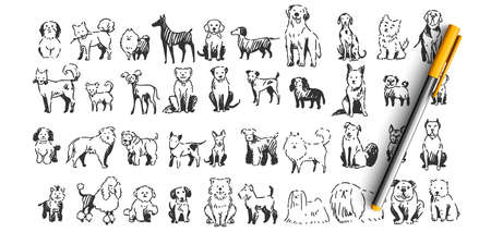 Dogs doodle set. Collection of hand drawn pencil ink drawing sketches templates patterns of domestic animals puppies dolmatins chihuahua pug spitz pets on white background. Human friends illustration. Vectores