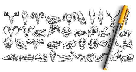Skulls doodle set. Collection of hand drawn sketches templates patterns of dead wild animal goat dear skeletons head bone isolated in line. Halloween sign and cult symbols illustration. Illustration