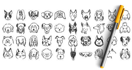 Dogs doodle set. Collection of hand drawn pencil ink drawing sketches templates patterns of domestic animals puppies dolmatins chihuahua pug spitz pets muzzles. Human friends illustration. Illustration