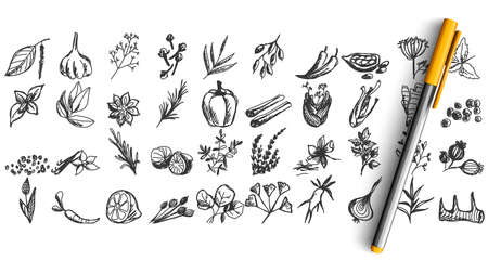 Spices doodle set. Collection of pen pencil chalk hand drawn sketches templates patterns of different condiments coriander carnation ginger isolated in line. Aromatic plants for cooking illustration.