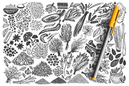 Spices hand drawn doodle set Vettoriali