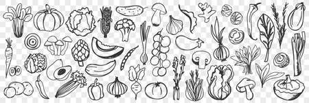 Vegetables hand drawn doodle set
