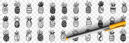 Tropical pineapple fruits doodle set 向量圖像