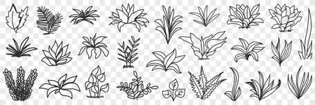 Leaves bunches on road natural pattern doodle set 向量圖像