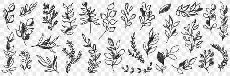 Leaves natural pattern doodle set 向量圖像