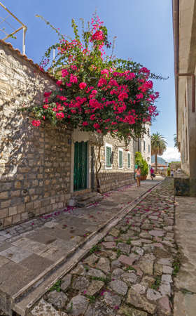 red bush: A quiet street in Herceg Novi  At the entrance to the house grows a huge red bush of bougainvillea Stock Photo
