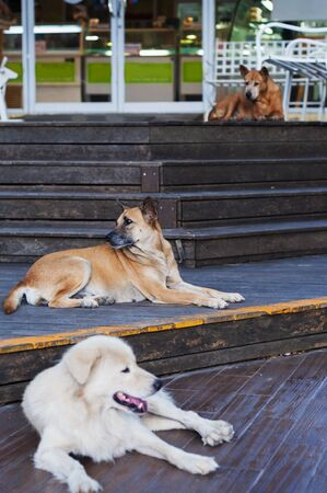 Three dogs looking to three directions lying on three Staircases.