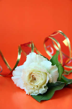 white roses and red ribbon on a red background Stock Photo - 9827920