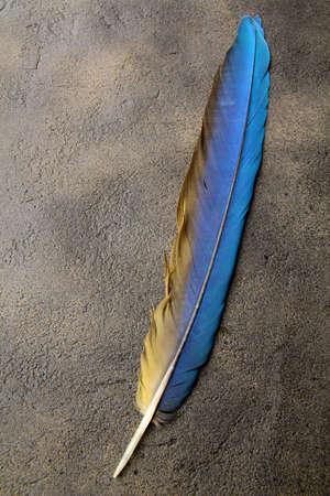 plume: plume sur un fond de l'espace vide pour le texte Banque d'images