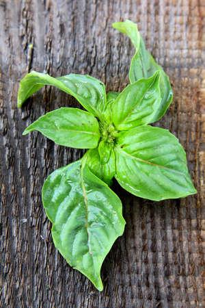 basilic: feuilles de basilic vert sur fond en bois