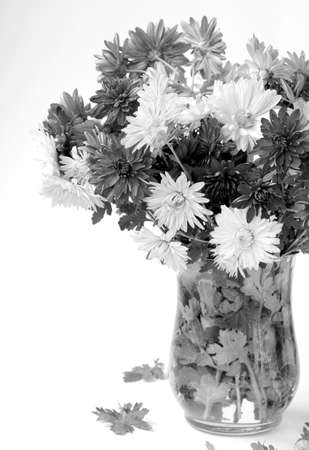 camomiles macro: bouquet of flowers autumn in a vase Stock Photo