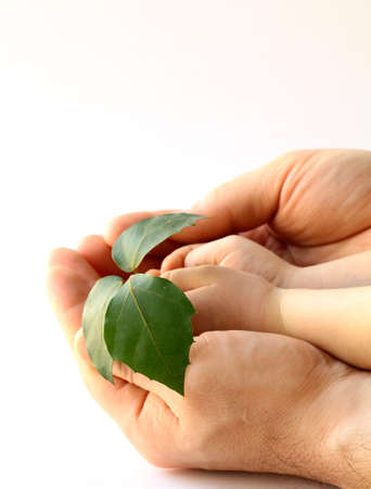 fathers and babys hands holding plant  photo