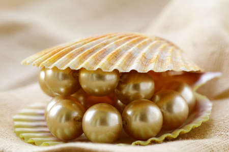 pearl  necklace in shell on a beige background photo