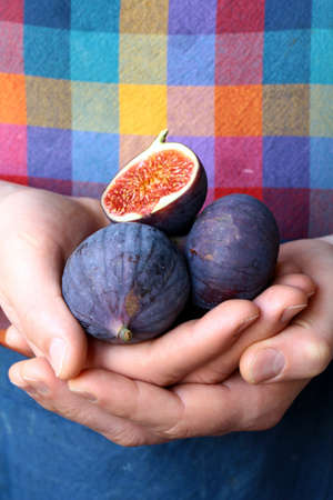 sweet fruit ripe group  figs in man s hands photo