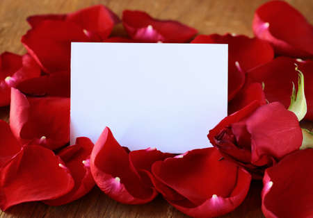 Petals of a red rose and a card for recording photo