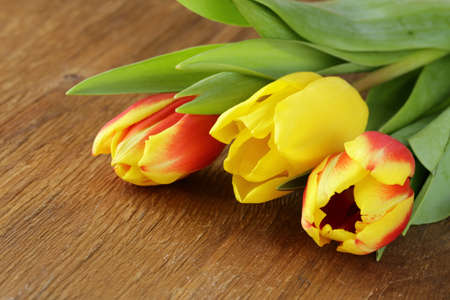 spring flowers tulips on wooden background Stock Photo - 17437982