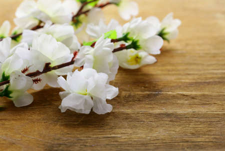 flowering sakura tree branches (artificial) on a wooden background Stock Photo - 18128865