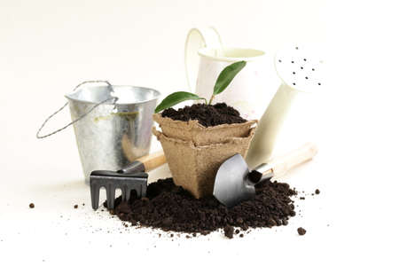 green plant grows from the ground with garden tools on a white background photo