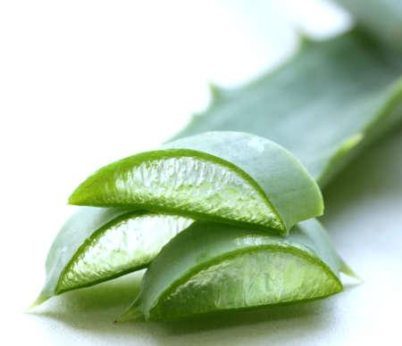 Fresh green leaves of aloe vera plant photo