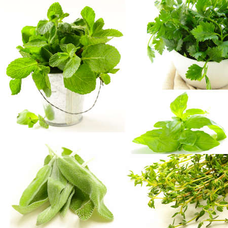 collage of different kinds of herbs (thyme, mint, basil, sage) photo