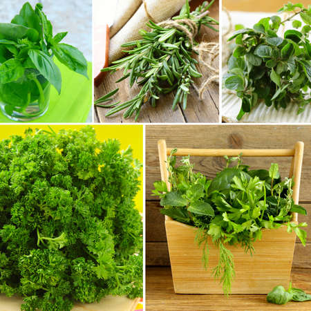 collage of different kinds of herbs (basil, oregano, parsley, rosemary) photo