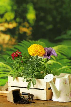 rake: garden flowers tools rake shovel watering can