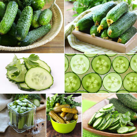 marinated gherkins: collage of organic fresh and pickled cucumbers